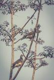 Περιστέρι στο δέντρο Στοκ εικόνα με δικαίωμα ελεύθερης χρήσης