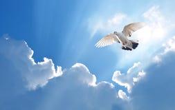Περιστέρι στο σύμβολο αέρα της πίστης πέρα από το λαμπρό υπόβαθρο στοκ φωτογραφία με δικαίωμα ελεύθερης χρήσης