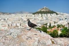 Περιστέρι στο λόφο Areopagus Στοκ φωτογραφία με δικαίωμα ελεύθερης χρήσης