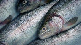 Περιστροφή ακατέργαστων ψαριών φιλμ μικρού μήκους