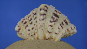 Περιστροφή, ανοικτό καφέ, όμορφο κοχύλι θάλασσας στην άμμο απομονωμένος απόθεμα βίντεο