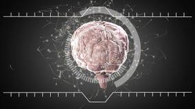 Περιστροφή εγκεφάλου και άσπροι κύκλοι διανυσματική απεικόνιση