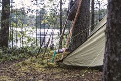 Περιστροφή, ράβδοι αλιείας και στάση εξοπλισμών κοντά σε μια σκηνή, σε ένα δάσος πεύκων στην ακτή μιας λίμνης στοκ φωτογραφία με δικαίωμα ελεύθερης χρήσης