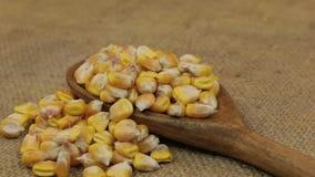 Περιστροφή, σωροί των σιταριών καλαμποκιού, που μειώνεται από ένα ξύλινο κουτάλι burlap απόθεμα βίντεο