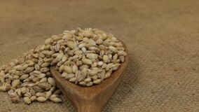 Περιστροφή, σωροί των σιταριών κριθαριού μαργαριταριών, που μειώνεται από ένα ξύλινο κουτάλι burlap φιλμ μικρού μήκους
