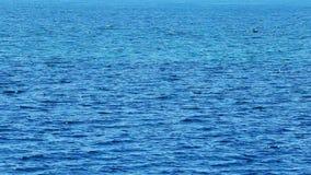 Περιτυλγμένος κύματα θάλασσας απόθεμα βίντεο
