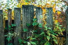περιφράξτε τους θερινούς ηλίανθους λιβαδιών ξύλινους Παλαιά γκρίζα χαρτόνια Ξύλινη ανασκόπηση Ένας φράκτης μια ημέρα φθινοπώρου σ Στοκ Εικόνες