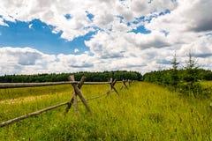περιφράξτε τους θερινούς ηλίανθους λιβαδιών ξύλινους Στοκ εικόνες με δικαίωμα ελεύθερης χρήσης