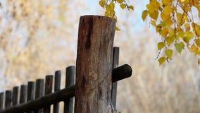 περιφράξτε τους θερινούς ηλίανθους λιβαδιών ξύλινους φιλμ μικρού μήκους