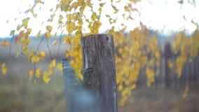 περιφράξτε τους θερινούς ηλίανθους λιβαδιών ξύλινους απόθεμα βίντεο