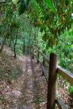 περιφραγμένα δάση μονοπατ&i Στοκ εικόνες με δικαίωμα ελεύθερης χρήσης