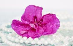 Περιδέραιο λουλουδιών και μαργαριταριών Στοκ Φωτογραφίες