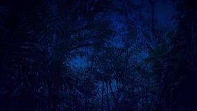 Περνώντας το πρόσωπο απότομων βράχων στη ζούγκλα τη νύχτα απόθεμα βίντεο