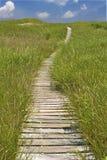 περπάτημα άμμου μονοπατιών αμμόλοφων Στοκ Εικόνες