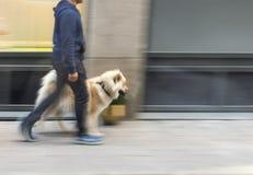 περπάτημα ατόμων σκυλιών Στοκ φωτογραφία με δικαίωμα ελεύθερης χρήσης