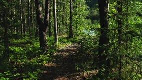 Περπάτημα μέσω της δασικής πορείας από τον ποταμό στην Αλάσκα απόθεμα βίντεο