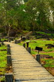 Περπάτημα μέσω του κήπου την καυτή άνοιξη κυνοδόντων Στοκ Φωτογραφία