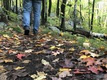 Περπάτημα μέσω του πάρκου το φθινόπωρο στοκ φωτογραφία με δικαίωμα ελεύθερης χρήσης