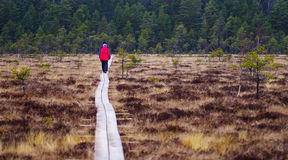 περπάτημα μονοπατιών ξύλιν&omicron Στοκ Φωτογραφίες