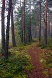 περπάτημα μονοπατιών Στοκ Φωτογραφίες