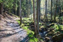 περπάτημα μονοπατιών Στοκ Εικόνες