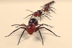 Περπάτημα μυρμηγκιών ελεύθερη απεικόνιση δικαιώματος