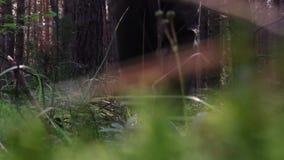 περπάτημα πάρκων ατόμων απόθεμα βίντεο