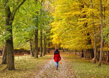 περπάτημα πάρκων φθινοπώρο&upsil Στοκ Φωτογραφίες