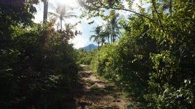 Περπάτημα σε ένα ίχνος με το βουνό στη θέα στοκ εικόνες