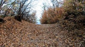 Περπάτημα σε ένα μονοπάτι το φθινόπωρο απόθεμα βίντεο