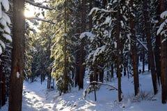 Περπάτημα σε μια χειμερινή χώρα των θαυμάτων Στοκ Εικόνες