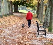 περπάτημα σκυλιών Στοκ εικόνες με δικαίωμα ελεύθερης χρήσης