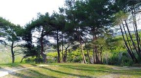Περπάτημα στα δάση στοκ εικόνες με δικαίωμα ελεύθερης χρήσης