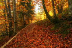 Περπάτημα στο δάσος Irati στοκ εικόνες