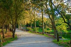 Περπάτημα στο πάρκο Στοκ Εικόνες