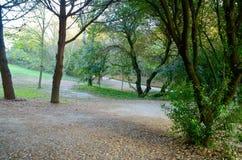 Περπάτημα στο πάρκο Στοκ φωτογραφίες με δικαίωμα ελεύθερης χρήσης