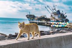 Περπάτημα της γάτας στην παραλία με το βυθισμένο σκάφος και το χρωματισμένο υπόβαθρο μπαλονιών Στοκ Εικόνες