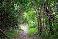 Περπάτημα της διαδρομής μέσω της βλάστησης Bushland στοκ εικόνα με δικαίωμα ελεύθερης χρήσης