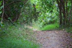 Περπάτημα της διαδρομής μέσω Bushland στοκ εικόνες