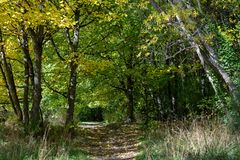 Περπάτημα της διαδρομής στα ξύλα το φθινόπωρο στοκ εικόνες με δικαίωμα ελεύθερης χρήσης
