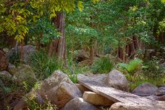 Περπάτημα της διαδρομής στο εθνικό πάρκο τροπικών δασών στην Αυστραλία στοκ φωτογραφία με δικαίωμα ελεύθερης χρήσης