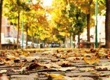 Περπάτημα της πορείας στην πόλη το φθινόπωρο Στοκ εικόνα με δικαίωμα ελεύθερης χρήσης