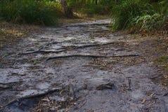 Περπάτημα της πορείας στο θάμνο στοκ φωτογραφία με δικαίωμα ελεύθερης χρήσης