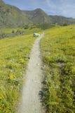 Περπάτημα του μονοπατιού μέσω των λουλουδιών άνοιξη Στοκ φωτογραφία με δικαίωμα ελεύθερης χρήσης