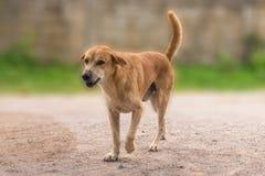 Περπάτημα του σκυλιού με το θολωμένο υπόβαθρο στοκ φωτογραφία με δικαίωμα ελεύθερης χρήσης