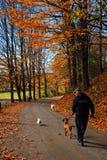 Περπάτημα του σκυλιού μια ημέρα φθινοπώρου στοκ εικόνες