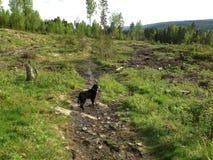 Περπάτημα του σκυλιού μου Στοκ Φωτογραφίες