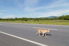 Περπάτημα του σκυλιού στο δρόμο Στοκ Φωτογραφία