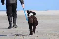Περπάτημα του σκυλιού Στοκ φωτογραφία με δικαίωμα ελεύθερης χρήσης