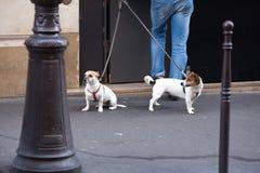 Περπάτημα του σκυλιού Στοκ Φωτογραφίες